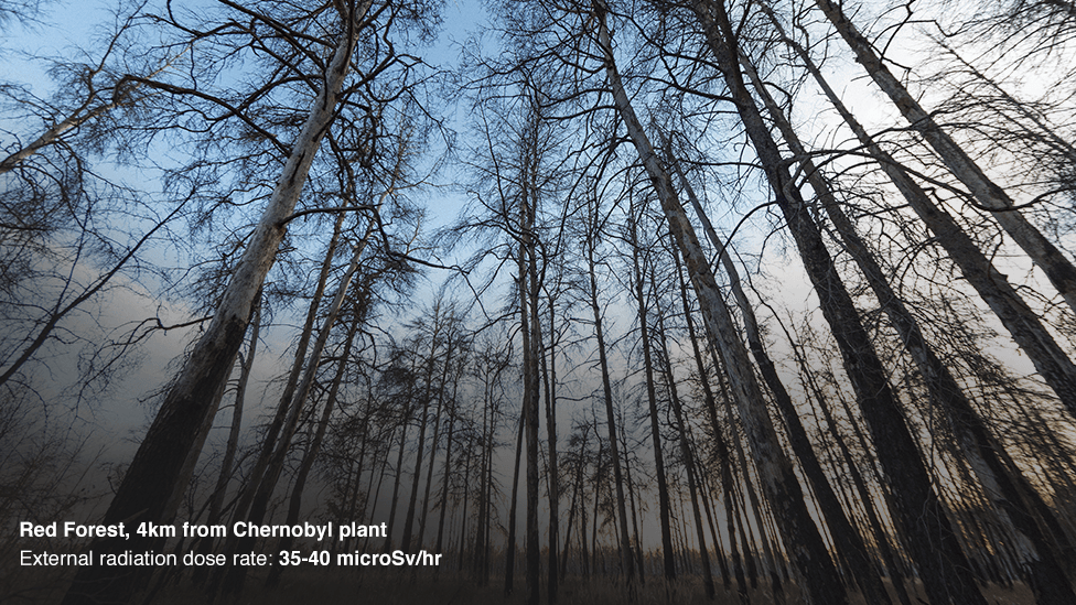 Red Forest, 4km from the Chernobyl reactor