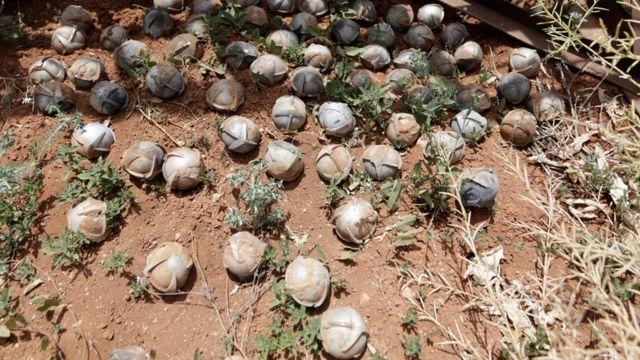 Decenas de bombas racimo recolectadas en un campo en un pueblo de Idlib, en Siria.