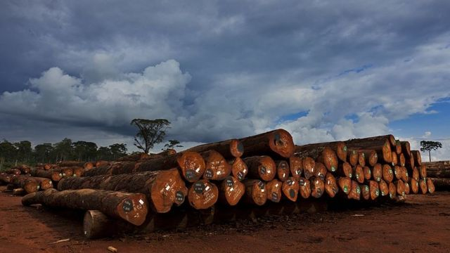 Industria maderera en África