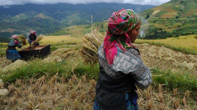 Người Hmong
