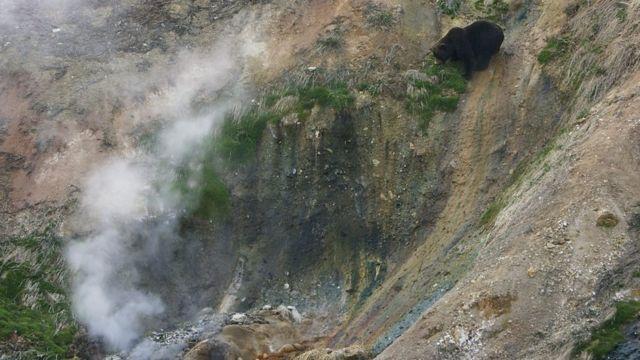 懸崖上的熊