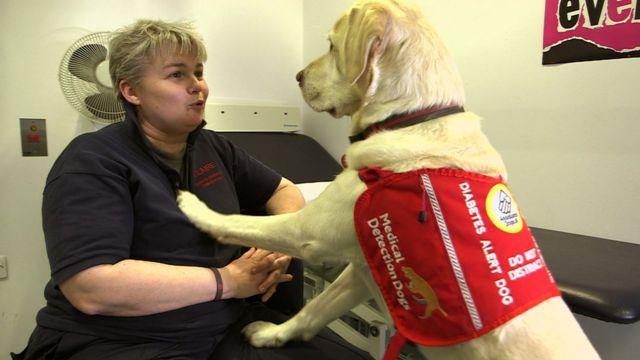 'My dog Magic, the lifesaver'