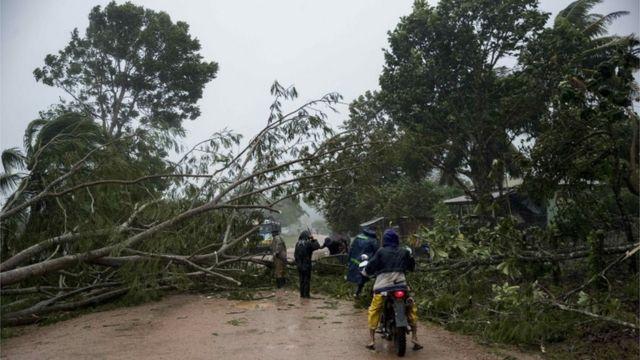 Árboles caídos por el huracán Eta en Nicaragua