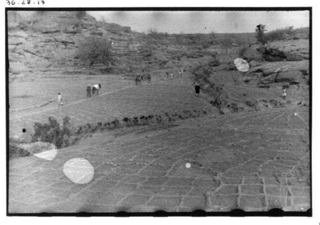 Campos de los dogones