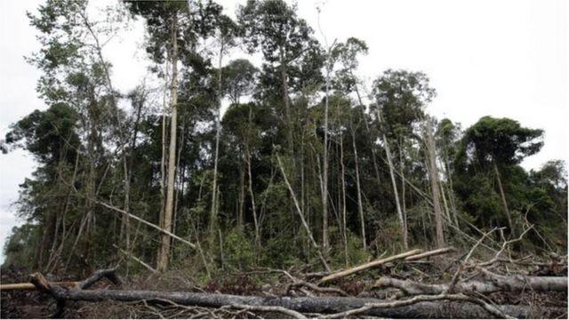သစ်တော ပြုန်းတီးမှု တတိယ အများဆုံး နိုင်ငံ , ရပ်စောက်မြို့နယ်အတွင်း တရားမဝင်သစ်