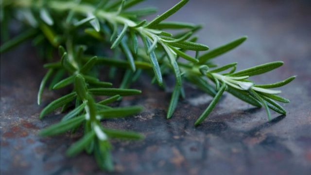 Exam revision students 'should smell rosemary for memory'
