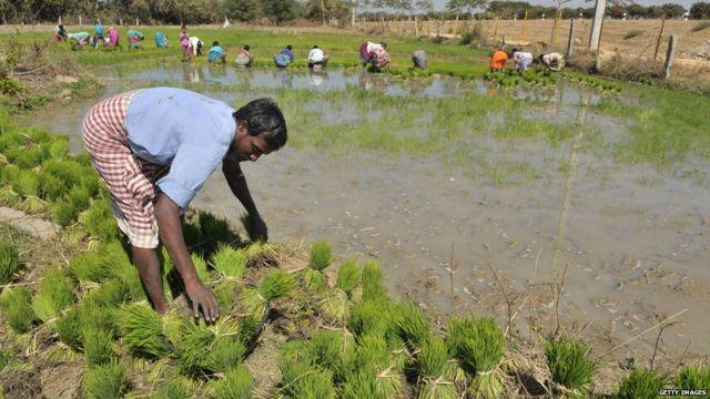 किसान, नरेंद्र मोदी, भारत कृषि