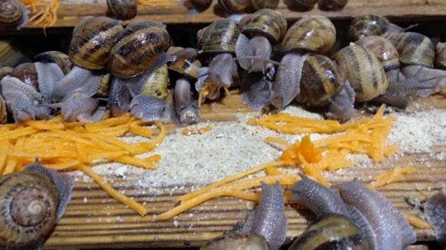 σαλιγκάρια