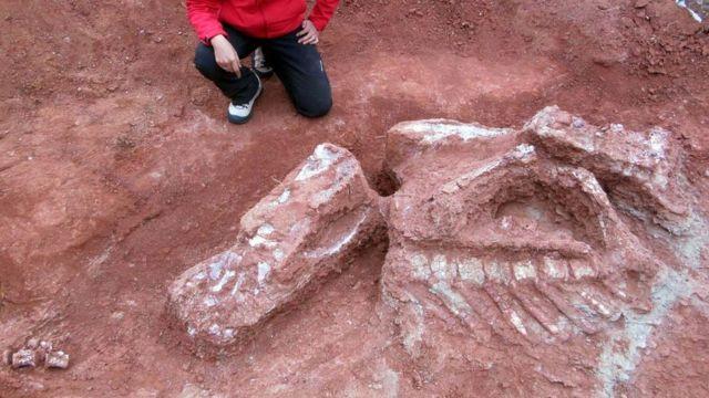 Динозавр сягав 8-10 метрів