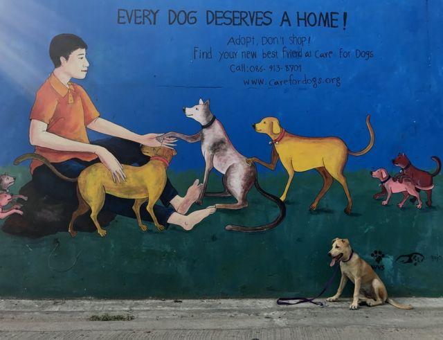 """""""Кожен пес заслуговує на дім!"""" - соціальна реклама на вулицях таїландського міста Чаінгмай закликає брати тваринок з притулку. Чапаті цілковито згодна."""