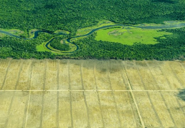 An aerial view showing dense forest meeting barren land cleared by humans