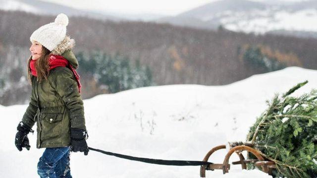 فتاة تسير وسط الثلوج وتجر عربة تحمل شجرة الكريسماس