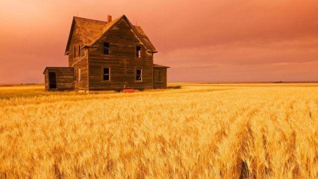 حقل من القمح