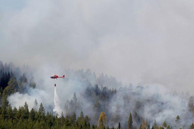 Лесные пожары уничтожили десятки тысяч гектаров леса в Швеции в этом году