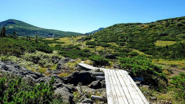 Деревянный настил защищает флору от ног многочисленных туристов