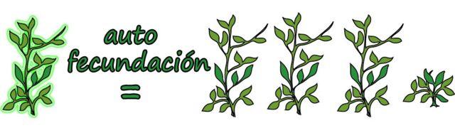 Planta alta autofecundada = 3 altas y 1 bajita