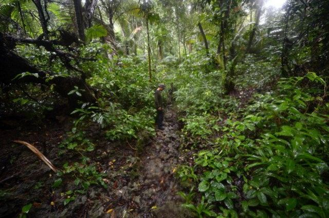 Anggota JRSCA (Javan Rhino Study and Conservation Area) menelusuri hutan Taman Nasional Ujung Kulon.