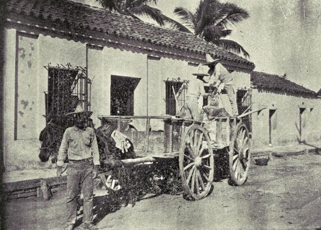 Fumigación manual en Mazatlán