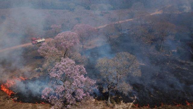 Focos de incêndio destroem área no Pantanal