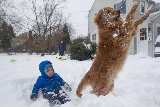 犬は喜び庭を……。「チェイス」がエイダン・ハフマンくんの前でボールにジャンプ。ペンシルベニア州スワースモアで(23日)