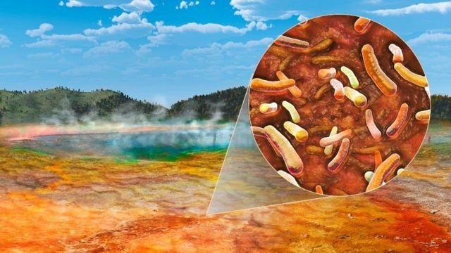 La bacteria que Brock llamó Thermus aquaticus sobrevive a altas temperaturas.