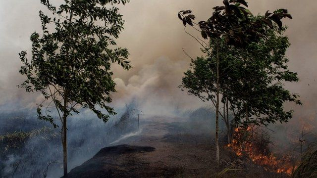 Fire burns peat land in Palembang, South Sumatra