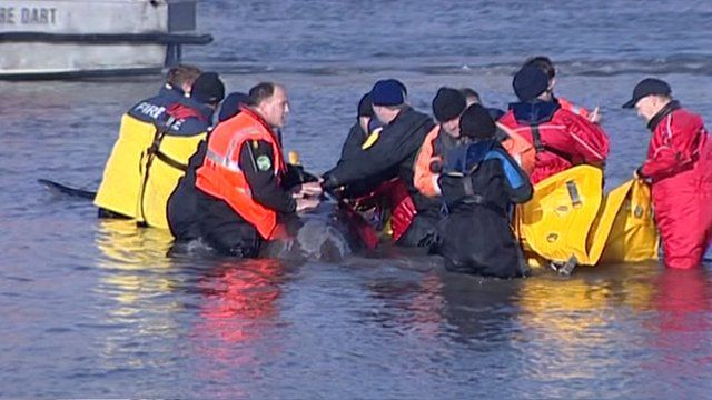Rescuers with the whale in the River Thames
