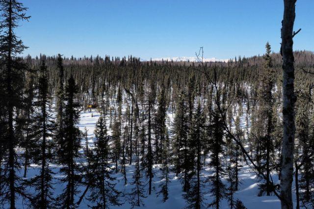 Árboles y panorama en Alaska