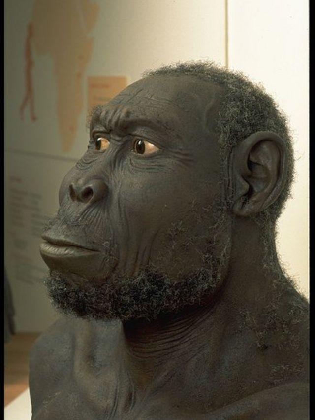 Reconstrucción en el Homo Rudolfensis.