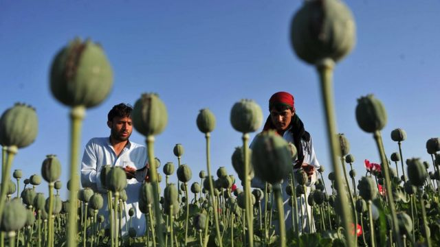 Agriculture is the main source of income in many of Nangahar's districts, including wheat, rice and poppy cultivation