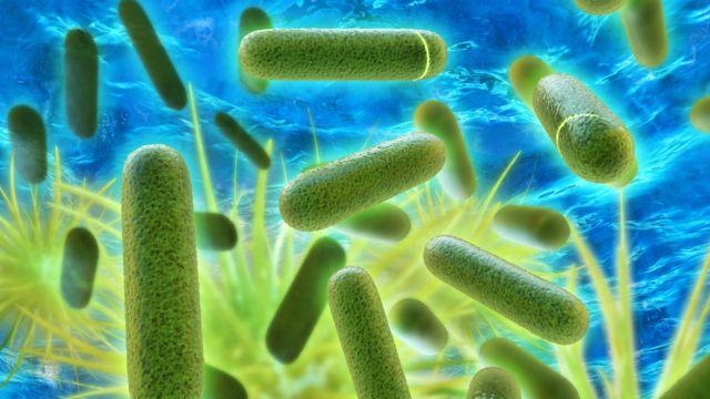 Bacteria legionela