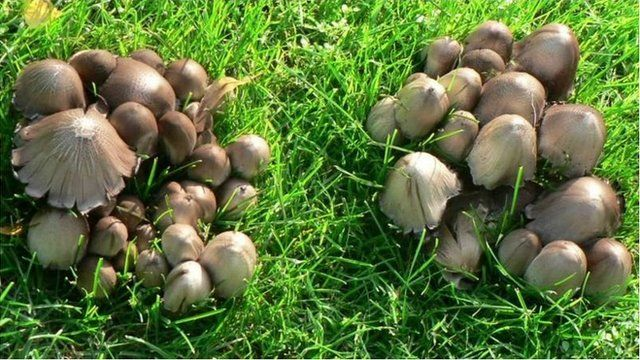 蘑菇的神奇:引領時尚潮流和其它五大趣聞與妙用