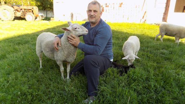 istočno frizijska ovca sajber pastir