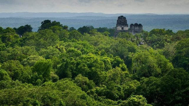 The Maya relied on seasonal rainfall for their supply of water, which they collected in reservoirs.