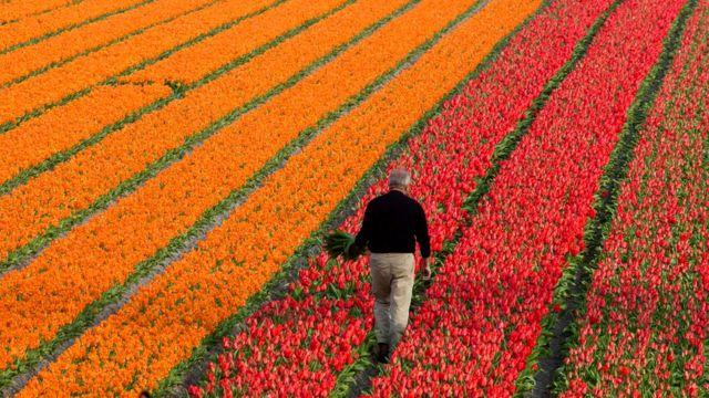 Жители Нидерландов - самая высокая нация в мире. Средний рост голландца - 182,5 см