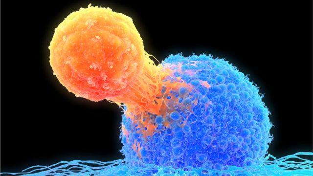 Células T