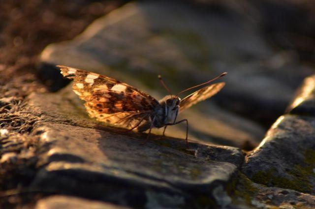 حشرة العتة