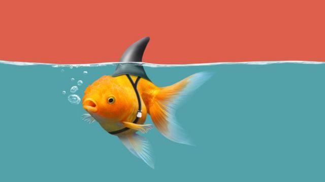 shark fin fish