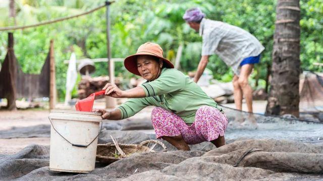 Penduduk desa memanen guano, bahan pupuk yang populer di Kamboja dan Thailand tetapi membawa risiko penyakit.