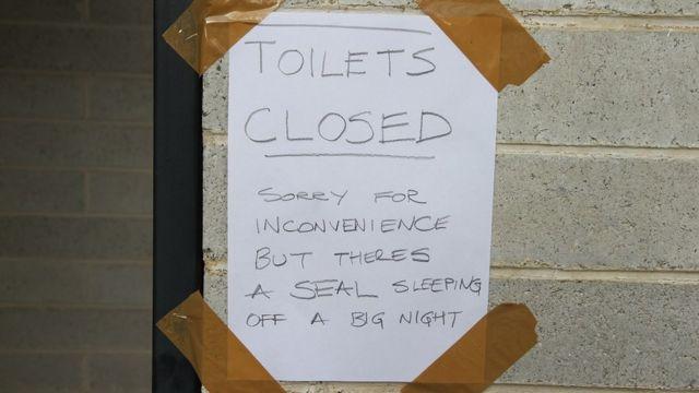 トイレの閉鎖を告げる張り紙には「中には、大変な夜を過ごして疲れたオットセイが寝ています」と書いてある