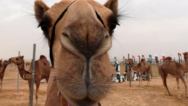 운송수단하면 자동차가 먼저 떠오르는가 낙타가 먼저 떠오르는가?