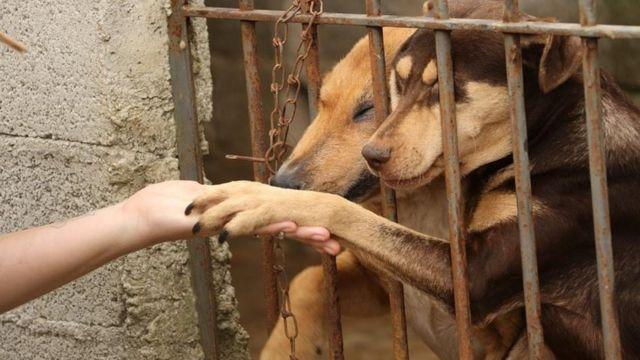 A 'epidemia de abandono' dos animais de estimação na crise do coronavírus - BBC News Brasil