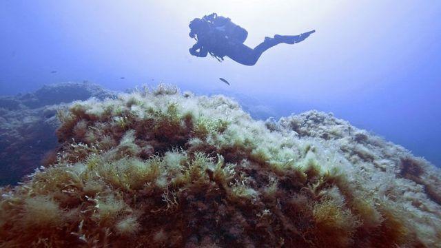 Un buzo explorando el fondo del mar