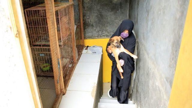 Setelah medias, tujuh anjing Hesti akan dirawat oleh LSM, sementara empat akan tetap berada di tempatnya.