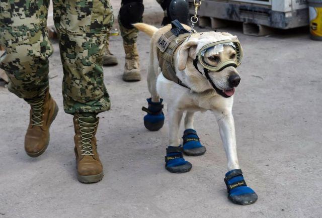 Anjing Frida