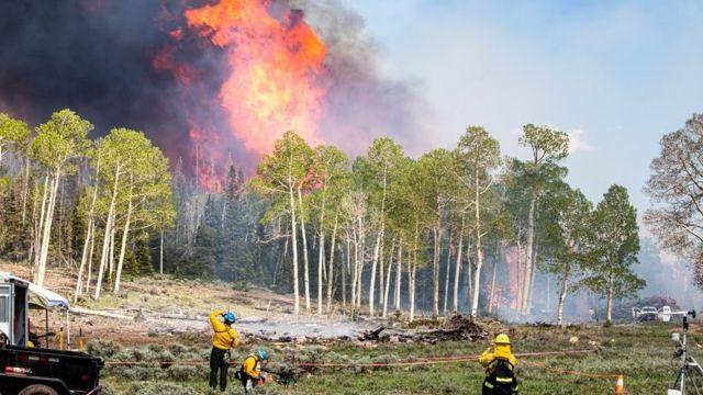 Cientistas monitoram incêndio florestal que produz fumaça negra
