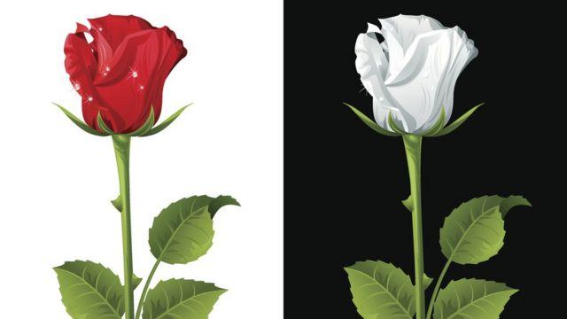 Красная роза и белая роза