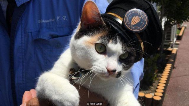Yontama ('Tama Empat') adalah kucing calico terbaru yang menjadi kepala stasiun Kereta Listrik Wakayama dan bekerja di Stasiun Idakiso