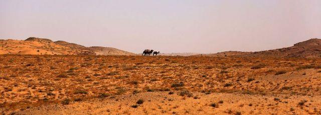 内モンゴル自治区は観光にはもってこいだが、職場となるとそうでもないかもしれない。多くの人はここで仕事を得るのは避けたいようだ(写真はゴビ砂漠を進むラクダ。今年7月撮影)