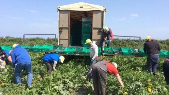 Брекзит і городина: як українські заробітчани допомагають Британії - BBC  News Україна